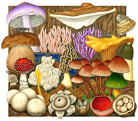 Fungi Diversity by Virge Kask