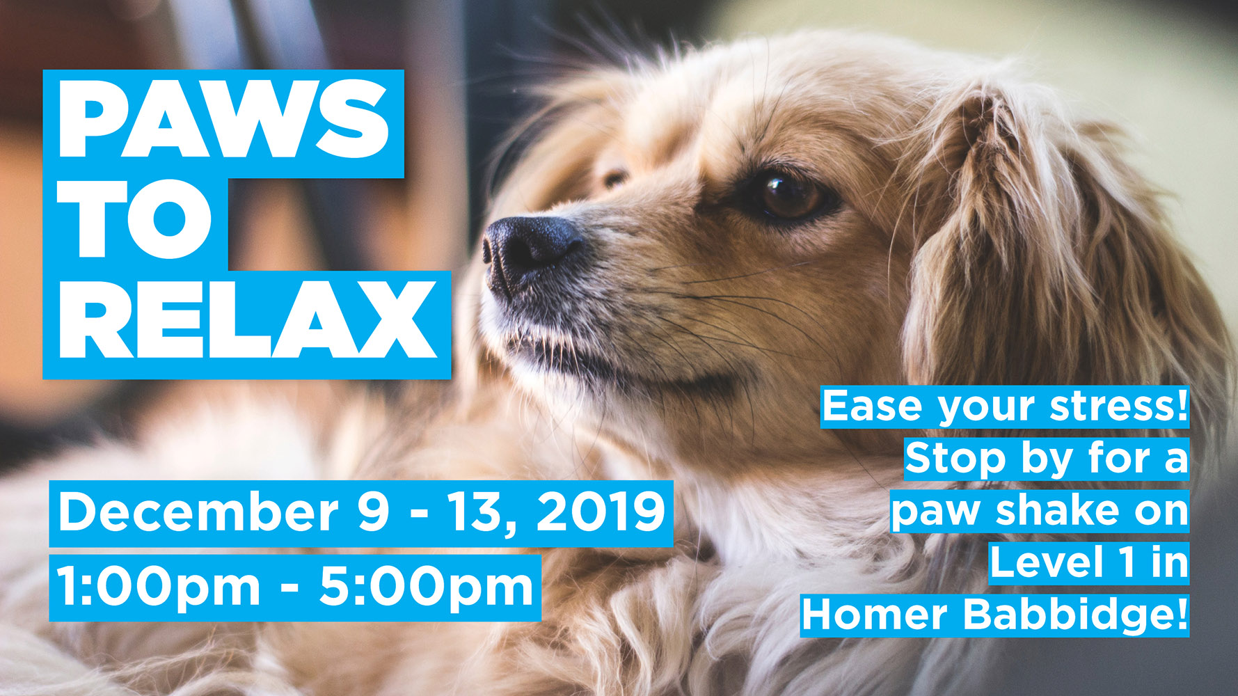 Paws To Relax December 9-13, 2019 1:00-5:00pm Ease your stress! Stop by for a paw shake on Level 1 in Homer Babbidge!